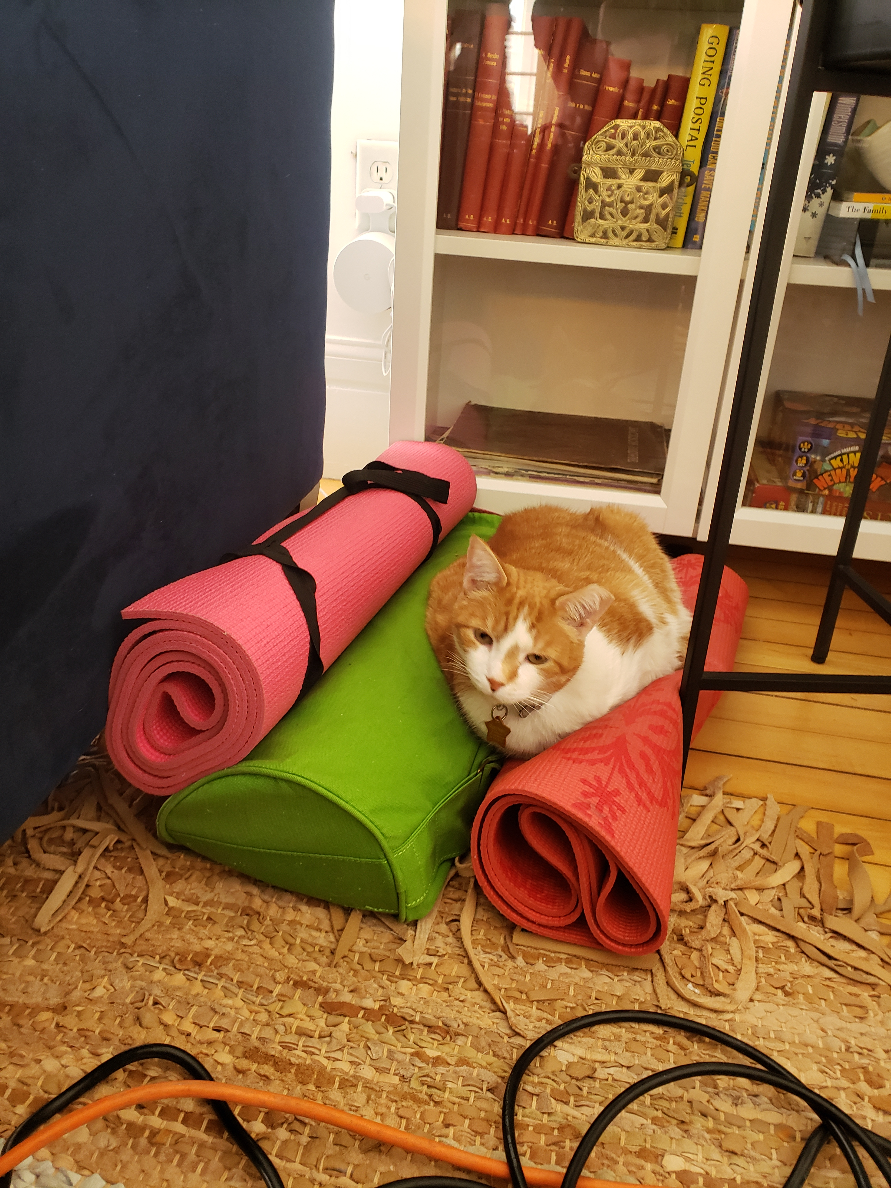Mucha the Cat on a pile of yoga mats
